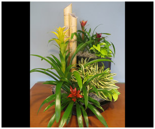Interior Rotating Plant Program from Plantasia Interiors