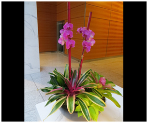 Exterior Rotating Plant Program from Plantasia Interiors