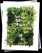 Living Walls at Plantasia Interiors
